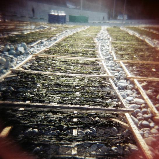 Seaweed Drying in Geojedo