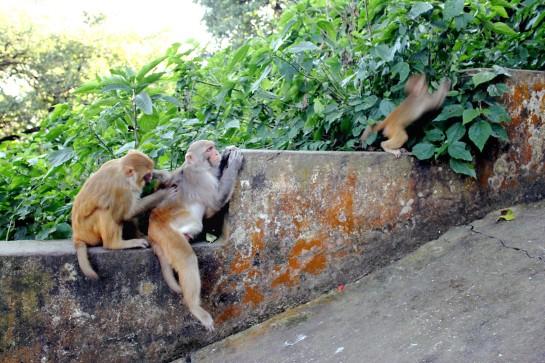 Swayambhunath Monkey Temple