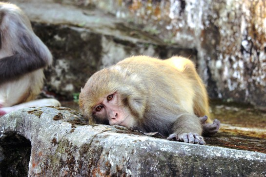 Swayambhunath Monkey Temple